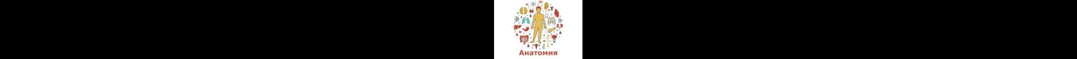 Итоги конкурса по анатомии и физиологии человека «Самый, самый, самый»